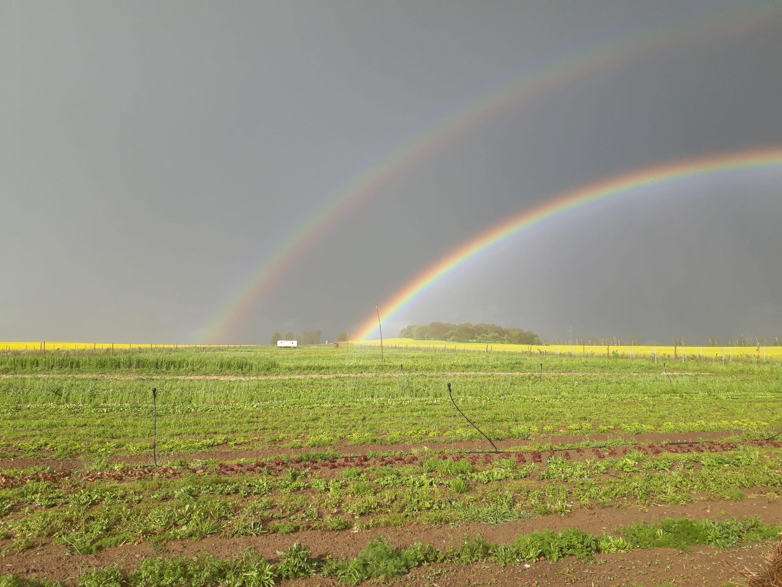 Folge 5: Kulturland eG und die Ackerilla-SoLaWi – Kooperative Landwirtschaft als Zukunftmodell